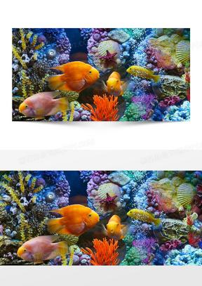 梦幻海底世界鱼背景