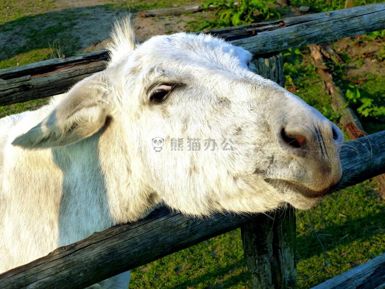 ppt配图 自然风景 农业 动物 牛