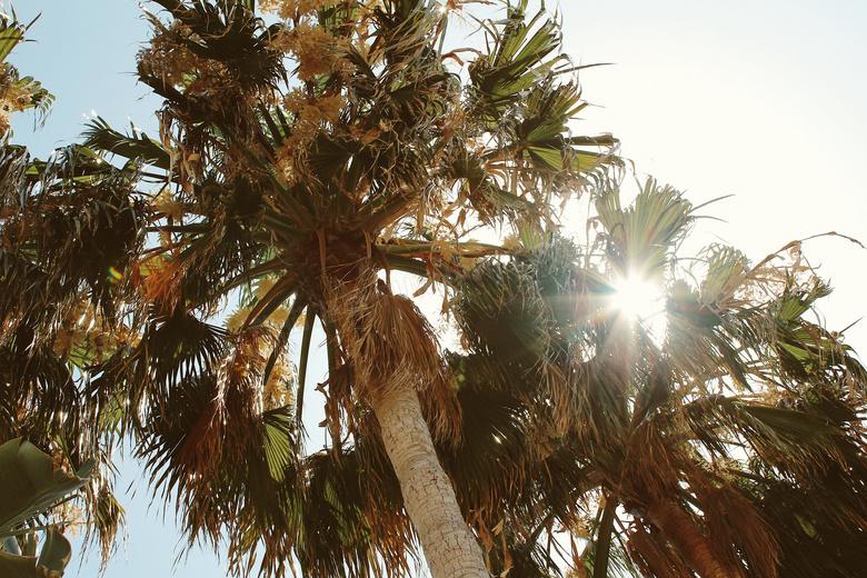 #椰子树jpg别墅图片下载_4128*3096格式_两层像素9.5米14米设计图图片