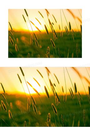 领域 草地 夏天