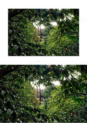英国皇家植物园 花园 这个