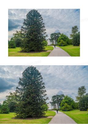 这个 橘园 英国皇家植物园