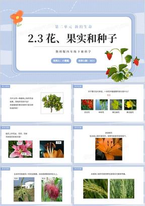 教科版四年级下册花、果实和种子课件PPT模板