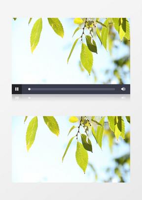 夏天户外公园阳光下树叶实拍中美亚洲欧美综合在线素材