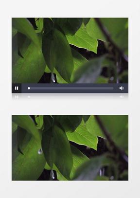 夏天下雨绿色植物实拍中美亚洲欧美综合在线素材