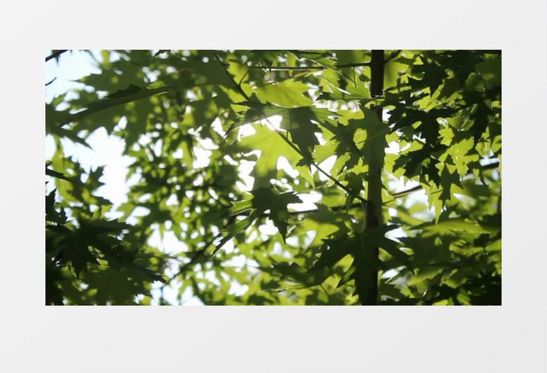 陽光下的綠色茂盛樹葉實拍視頻