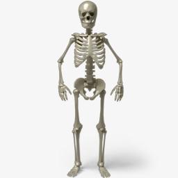 人体骨骼结构图骷髅人png图片素材免费下载 人体png 256 256像素 熊猫办公